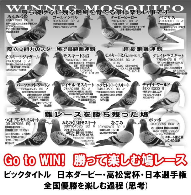 Go to win! 勝って楽しむ鳩レース ビッグタイトル 日本ダービー、高松宮杯、日本選手権、全国優勝を楽しむ過程(思考)