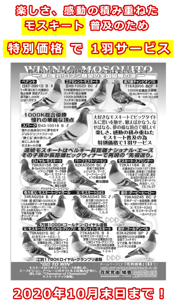 花尻鳩舎、モスキートレース鳩普及のため、特別価格で1羽サービス。2020年10月末日まで